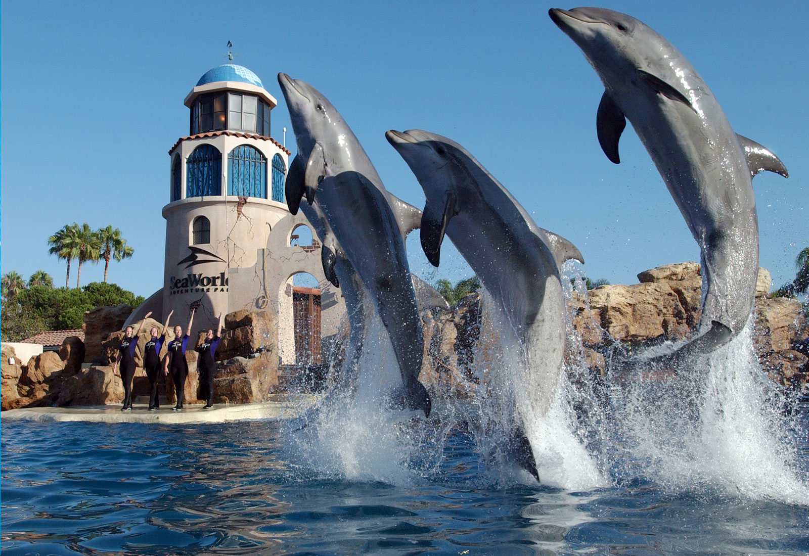 SeaWorld San Diego Rides Dazzling Shows and Animal Exhibits